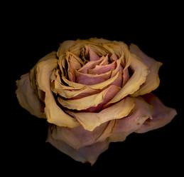 Flower 71 Black Series 2008
