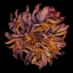 Flower 23 Black Series 2002