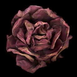 Flower 12 Black Series 2002
