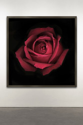 "Botanical Frame BL # 64 40x40"""