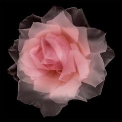Flower 53 Black Series 2004