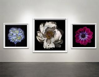 "Botanical Frames 40x40"" & 30x30"""