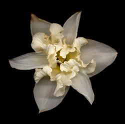 Flower 83 Black Series 2007
