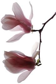 Flower 48 White Series 2002