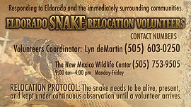 Eldorado Snake Relocation Volunteers.jpg