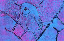 ptáček.png