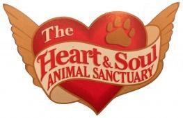 Heart & Sould sancuatry.jpg