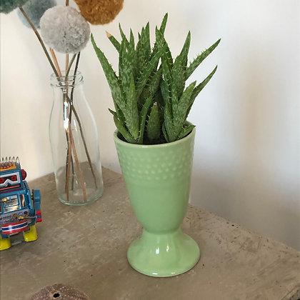 La succulente et son mazagran