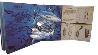探索鯊魚:海洋食物鏈最上層捕食者