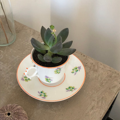 La succulente et sa tasse à café