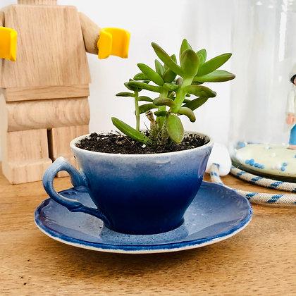 Plante dans tasse