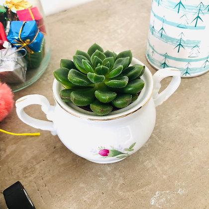 La succulente et son petit pot de sucre