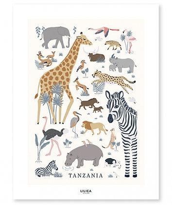 Affiche animaux sauvages d'Afrique Girafe Lyon Zèbre hippopotame autruche