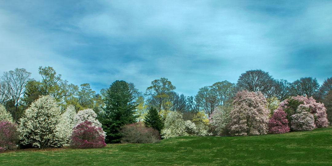 Morris Arboretum, PA