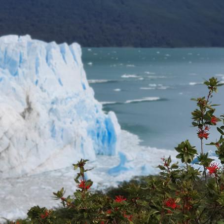 El Calafate & Perito Moreno