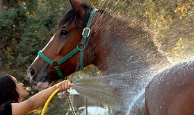 Horse getting a bath from its owner