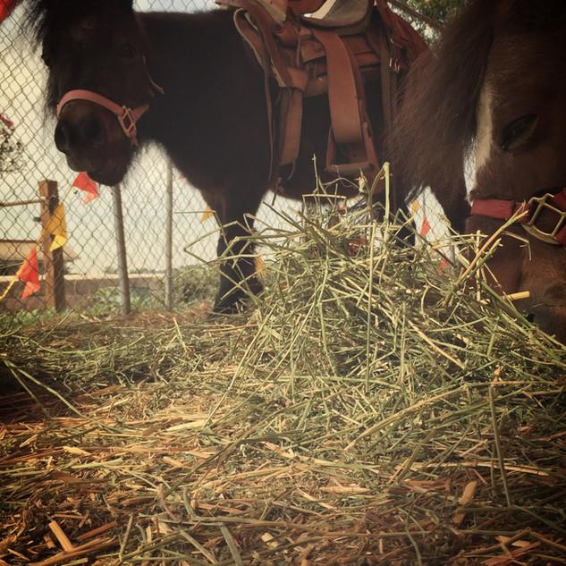 Whittier Pumpkin Patch Pony Rides