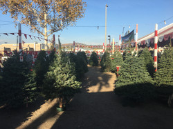 Whittier Chrstmas Trees