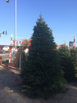 Whittier Christmas Trees