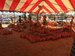 Whitttier Pumpkin Patch