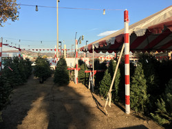 Whittiers Christmas Trees