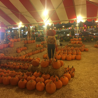 Whittier Pumpkin Patch & Christmas Trees
