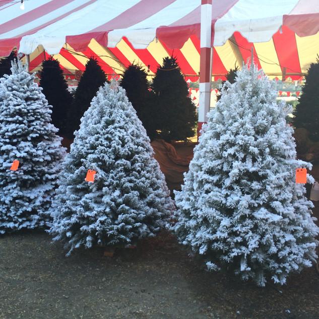 Whittier Pumpkin Patch & Christmas Trees