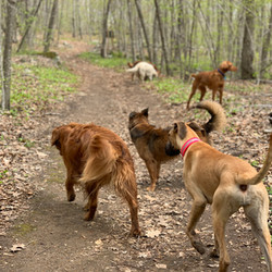 Dogventure