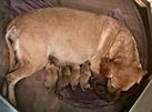 Baylee & puppies