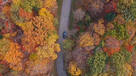 Following Car through Fall Trees | Drone