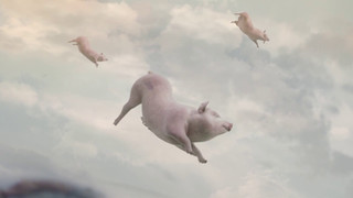 West Virginia Lottery - When Pigs Fly