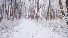 Snowy Woods Slow Mo 01   Drone