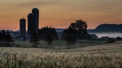 foggy farm morning