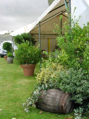 Location de plantes décor événement
