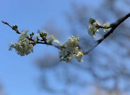 Spring in strange times