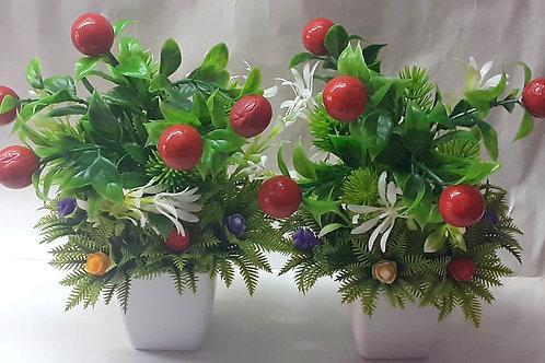 Red Cherry Flower Plant