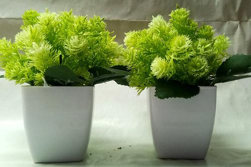 Mini Green Leaves Flower Plant