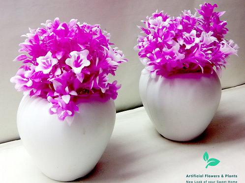 Purple Flower Plant
