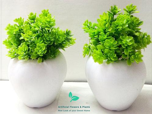 LGreen Flower Plant
