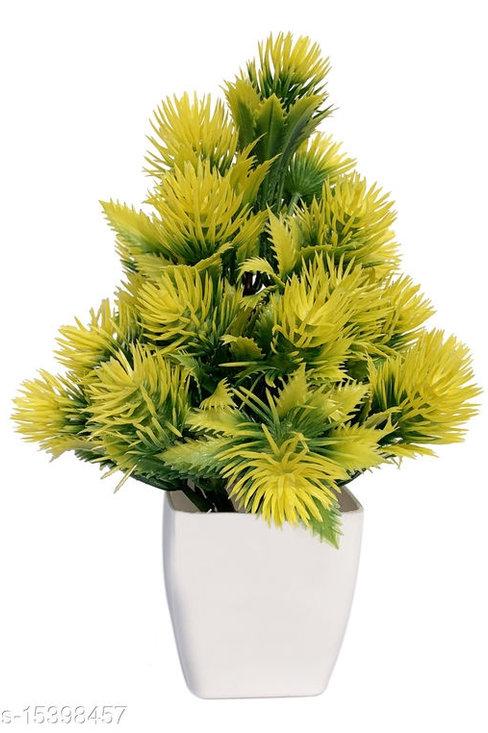M-GY Plant