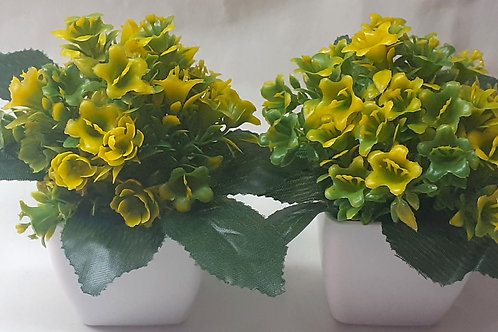Mini Gyellow Flower Plant