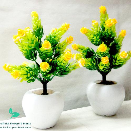 Pair of Yellow Flower Tree Plant