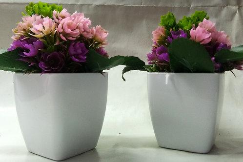 Mini Multicolor Flower Plant