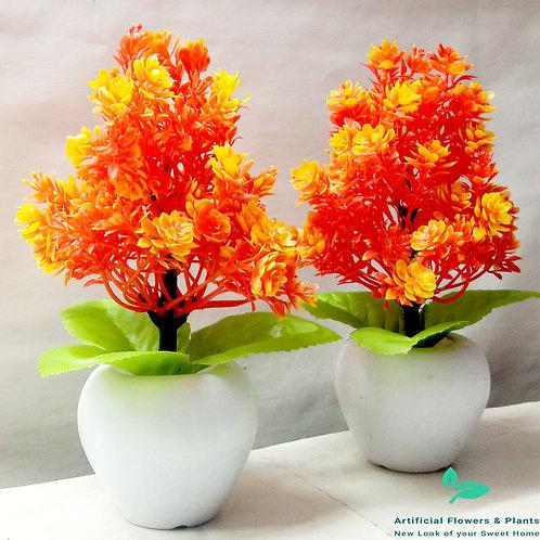 Pair of Orange Tree Plant