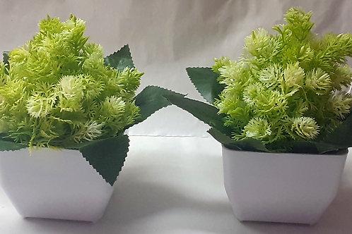 Green B Flower Plant