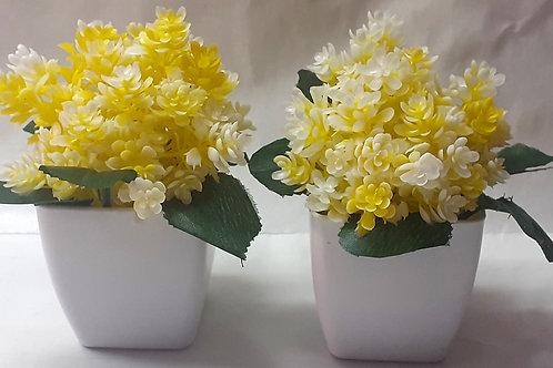 Mini Lyellow Flower Plant