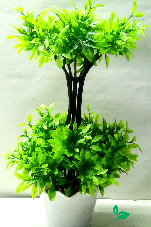 Green Leaves Bonsai Tree