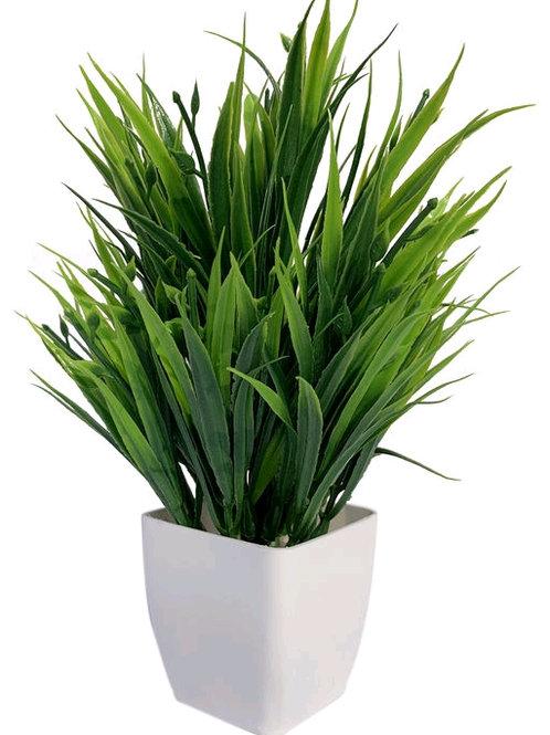 M-GreenG2 Plant