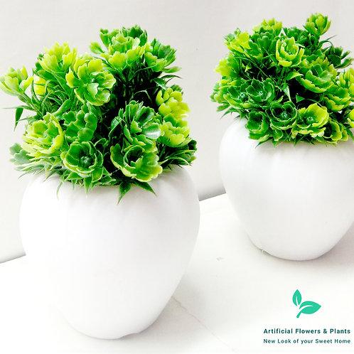 DGreen Flower Plant