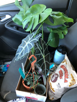 carseat plants